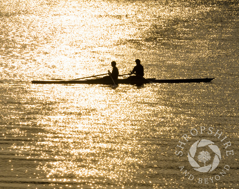 Rowers on the River Severn at sunset, Shrewsbury, Shropshire, England.