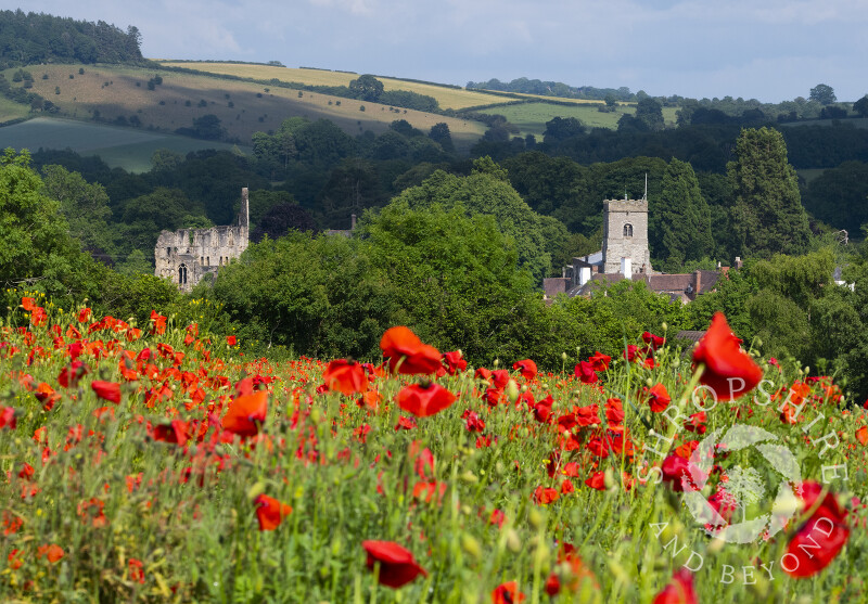 A field of poppies at Much Wenlock, with Wenlock Priory and Holy Trinity Church, Shropshire