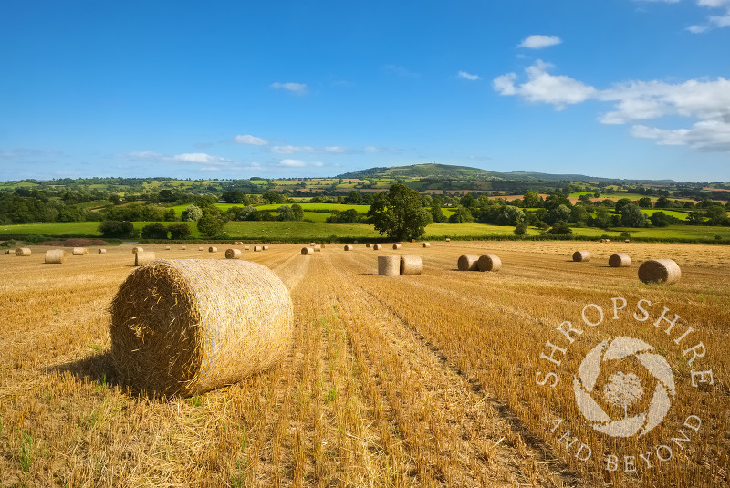 Straw bales in a field in the Corvedale, Shropshire, with the Brown Clee hill seen on the horizon.