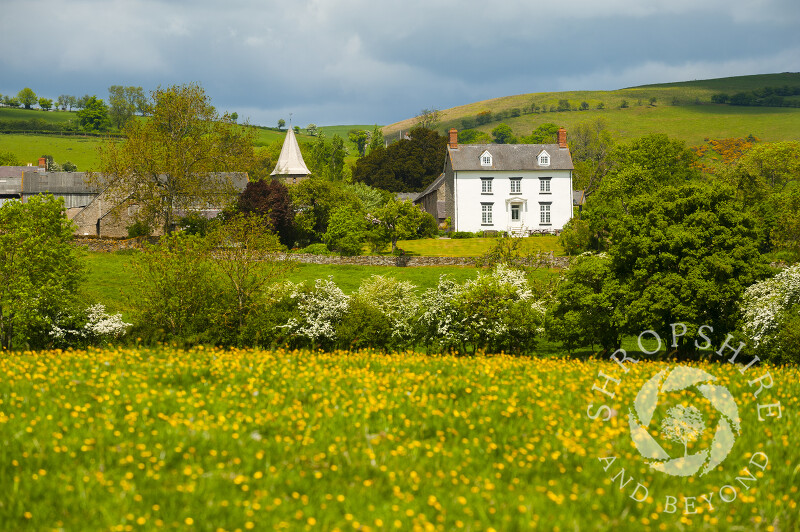 The shingled spire of All Saints' Church rises above a field of buttercups at Norbury, Shropshire.