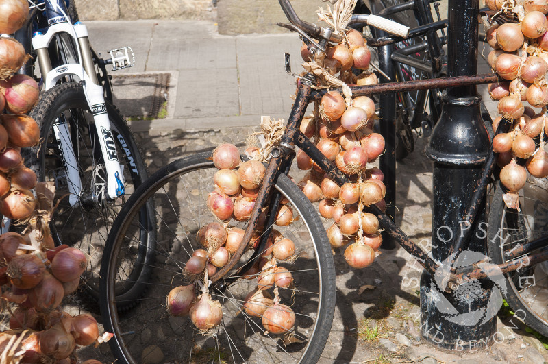 Onions displayed on a bicycle at the Ludlow Food Festival, Shropshire, England.