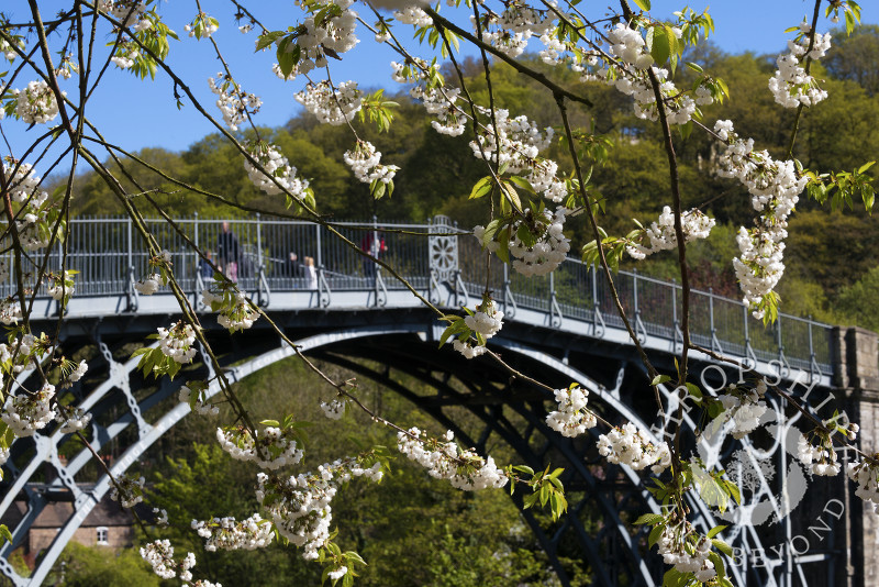Spring blossom frames the Iron Bridge in Ironbridge, Shropshire, England.