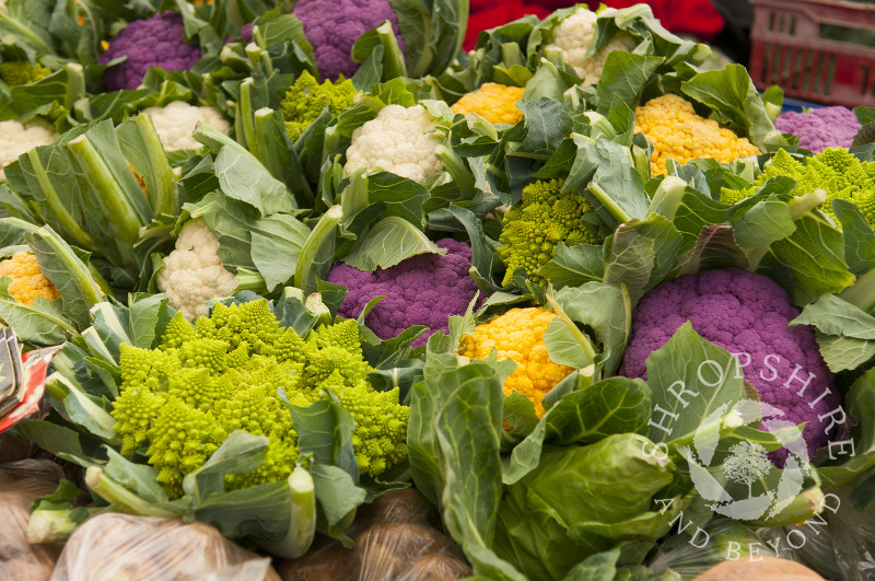 Romanesco and cauliflower on sale at Ludlow Food Festival, Shropshire, England.
