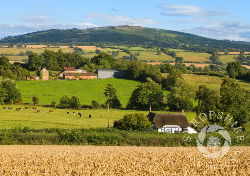 A thatched cottage nestles under Brown Clee hill in front of a wheat field at Shipton, near Much Wenlock, Shropshire.