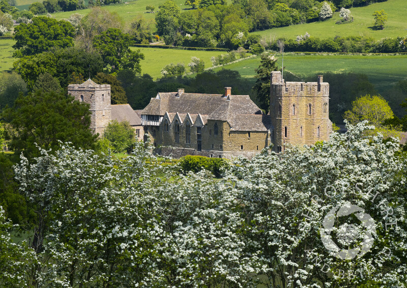 Stokesay Castle in Shropshire framed by hawthorn blossom.
