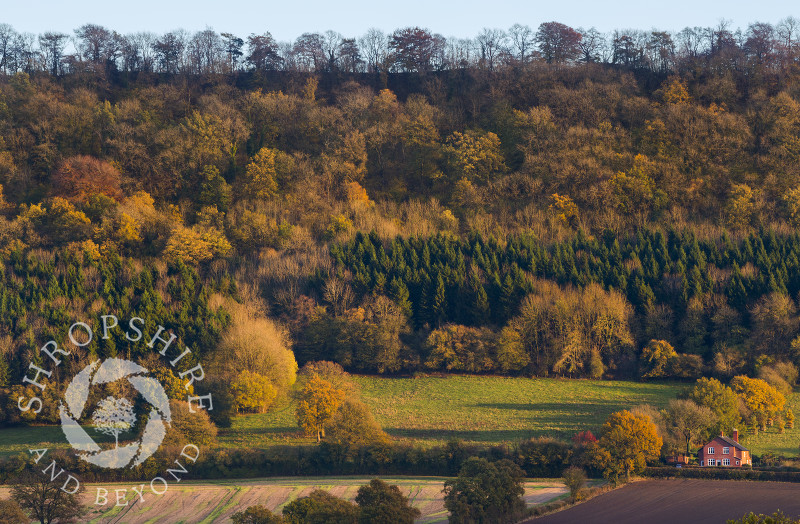 Late afternoon light picks out autumn colour on Wenlock Edge.