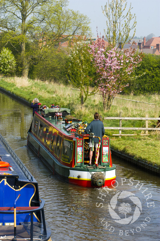 Canal boats and spring blossom at Ellesmere Wharf on the Llangollen Canal, Shropshire, England.