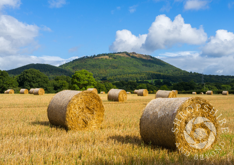 Harvest time beneath the Wrekin in Shropshire.