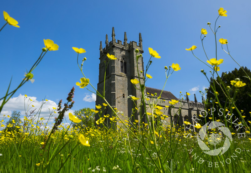 Buttercup meadow and St Mary Magdalene's Church at Battlefield, near Shrewsbury in Shropshire. The church stands on the site of the Battle of Shrewsbury in 1403.