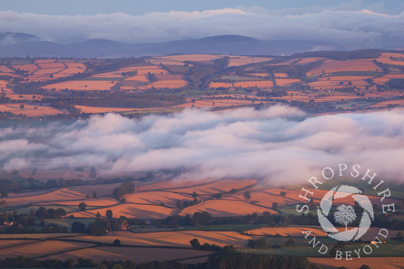 Mist over golden fields in Corvedale at sunrise from Titterstone Clee.