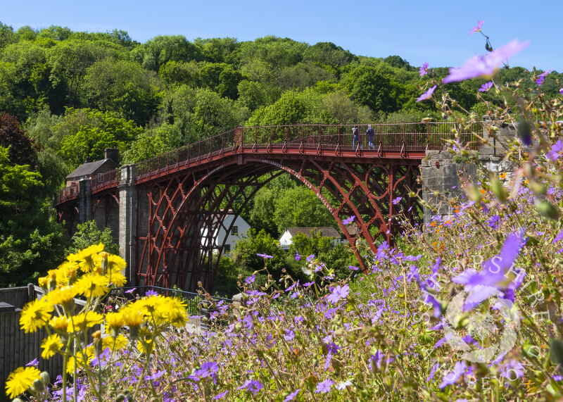 Wild flowers beside the Iron Bridge, Shropshire.