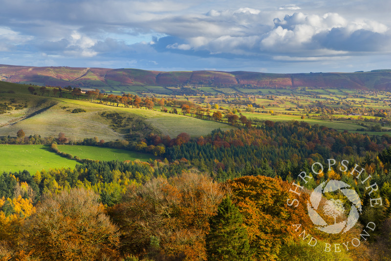 Autumn sunshine highlights the western slopes of the Long Mynd, seen from Heath Mynd, Shropshire.