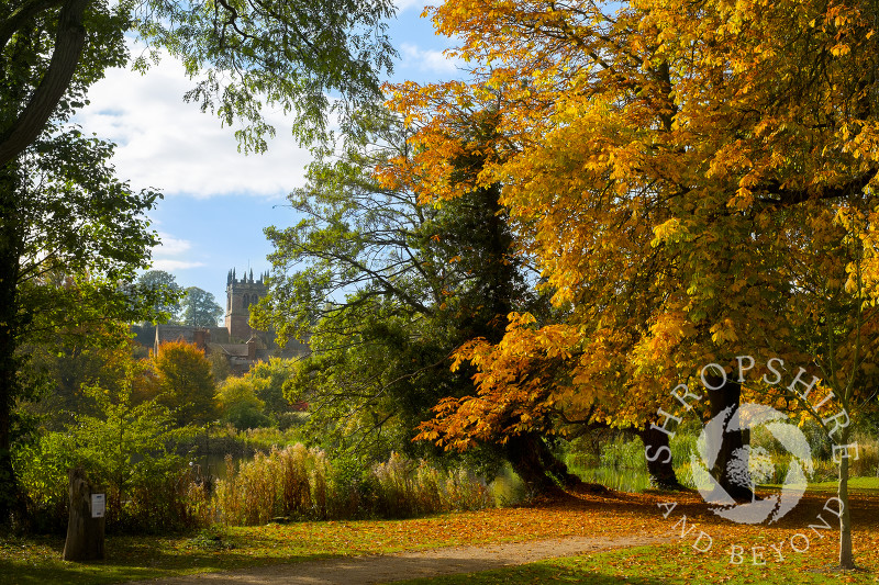 Autumn colour at Ellesmere, Shropshire, with a view of St Mary's Church.