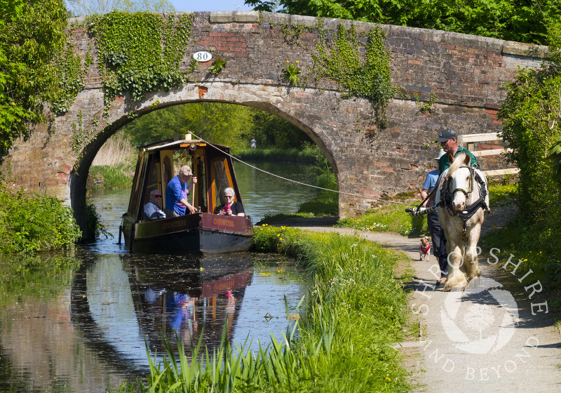 Horse drawn canal boat on the Montgomery Canal at Maesbury, Shropshire.