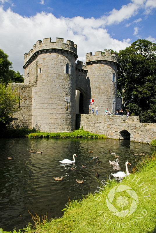 Swans on the moat at Whittington Castle near Oswestry, Shropshire, England.