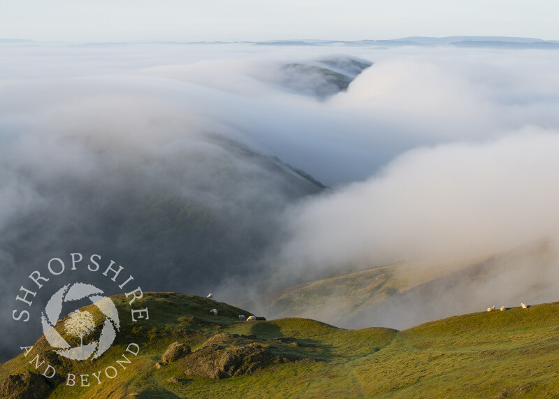Early morning fog over Helmeth Hill and Ragleth, seen from Caradoc, Shropshire.