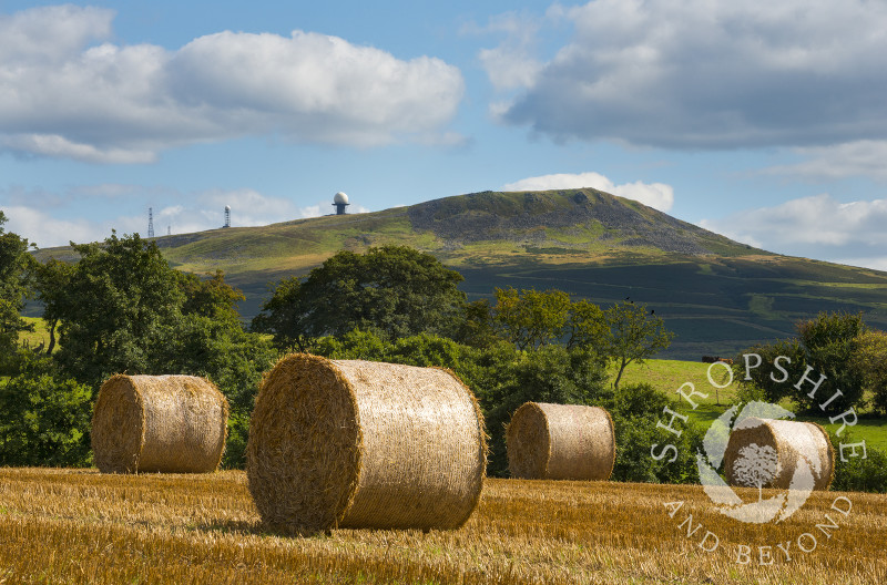Straw bales beneath Titterstone Clee at Stoke St. Milborough, Shropshire.