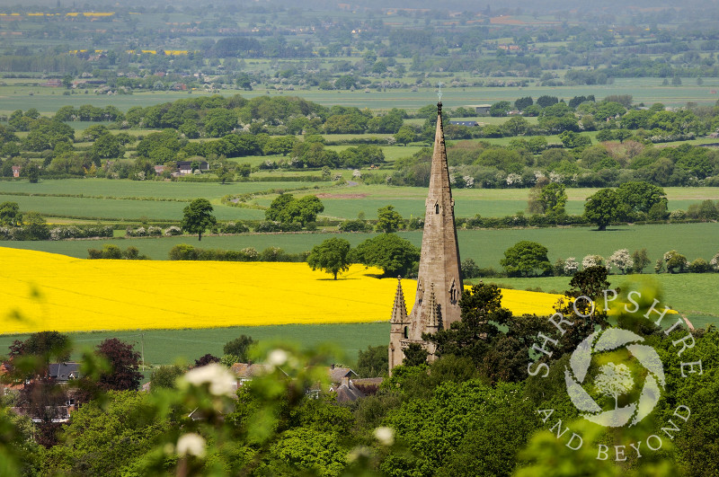 The spire of All Saints Church at Clive, seen from Grinshill Hill, Shropshire, England.