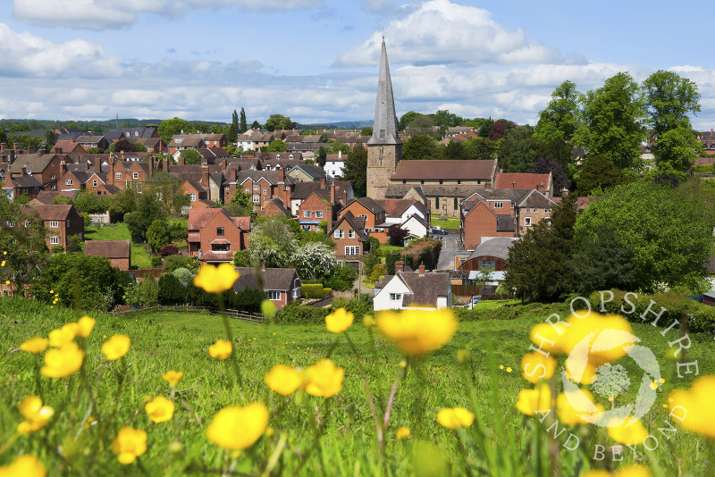 A buttercup field overlooks the town of Cleobury Mortimer in Shropshire.