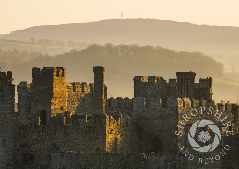 Early morning light on Ludlow Castle with Brown Clee, Shropshire.