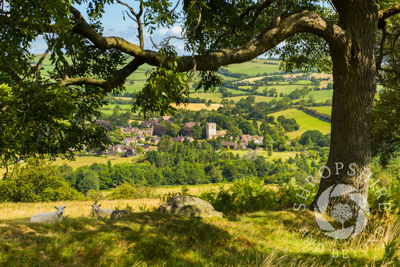 A tree on Hill End frames a view of the village of Cardington in the Shropshire Hills.