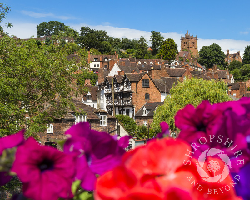 Summer colour in Bridgnorth, Shropshire, with a view of Bishop Percy's House and St Leonard's Church.