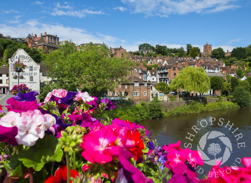 Summer colour beside the River Severn at Bridgnorth in Shropshire.