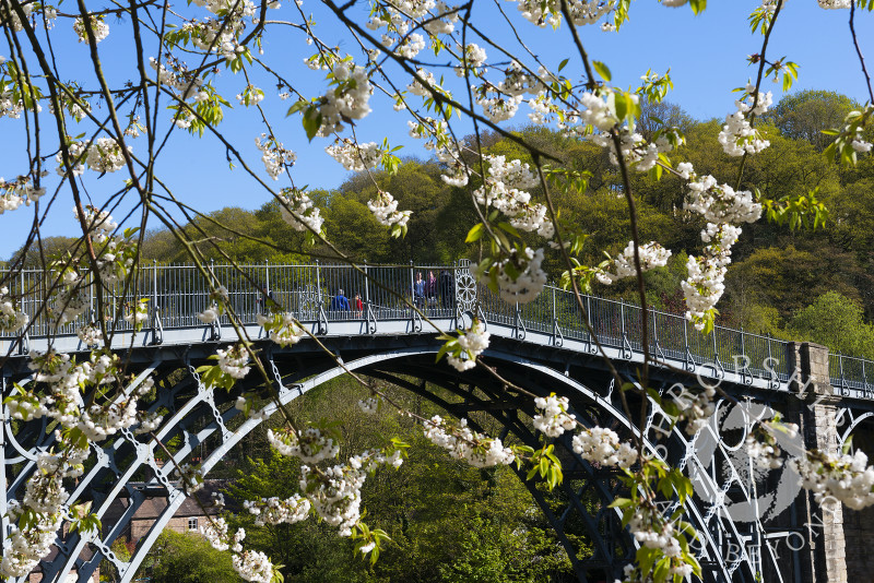 Spring blossom at the Iron Bridge in Ironbridge, Shropshire, England.