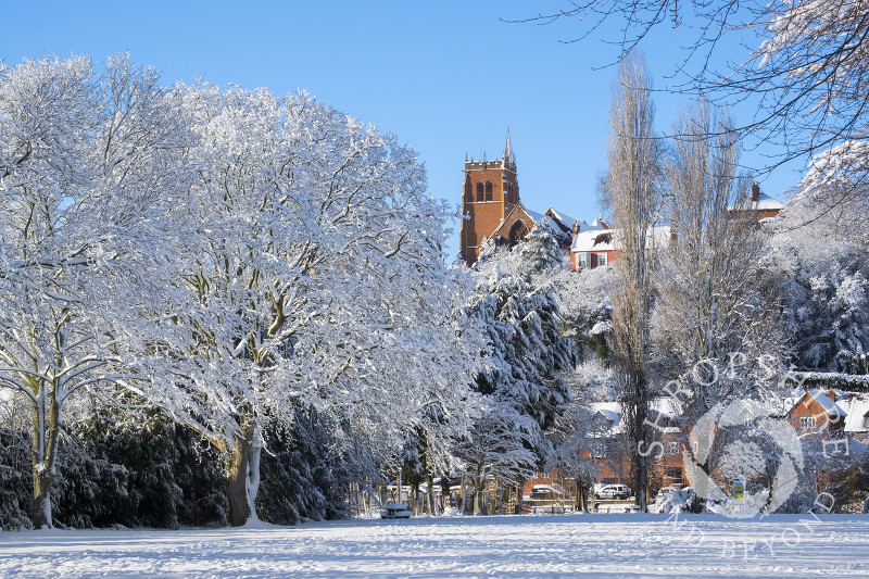 Snow-covered trees in Severn Park at Bridgnorth, Shropshire, overlooked by the tower of St Leonard's Church.
