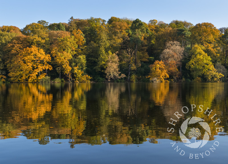 Autumn colour reflected in Blake Mere, near Ellesmere, Shropshire.