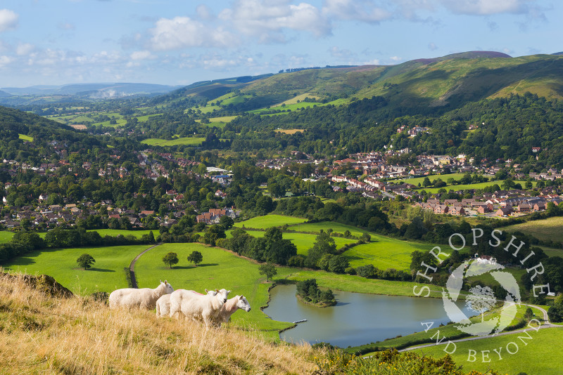 A group of sheep on Caer Caradoc overlooking Church Stretton with the Long Mynd, Shropshire.