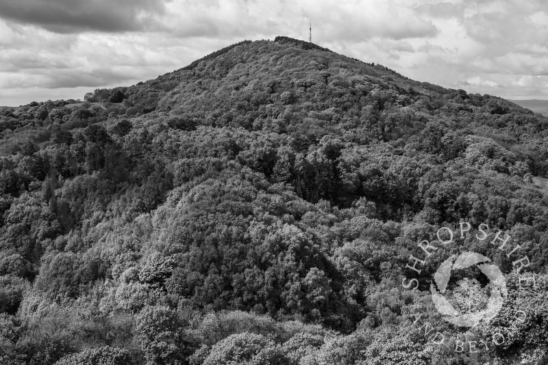 Black and white study of the Wrekin seen from the Ercall, Shropshire, England.