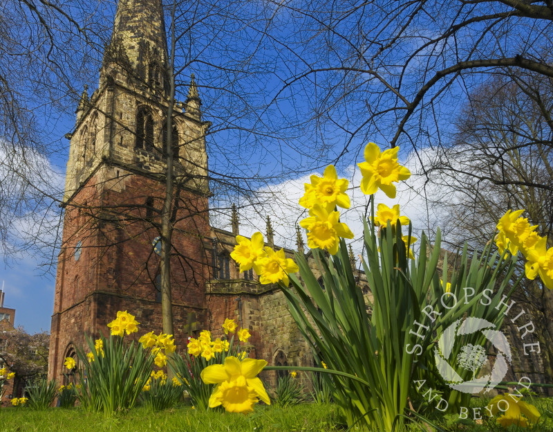 Springtime at St Mary's Church, Shrewsbury, Shropshire, England.