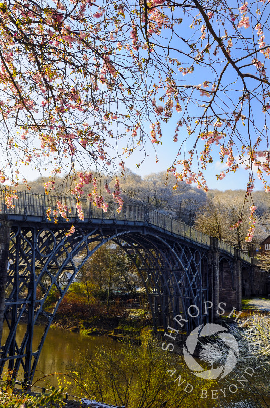 Spring blossom and the Iron Bridge at Ironbridge, Shropshire, England.
