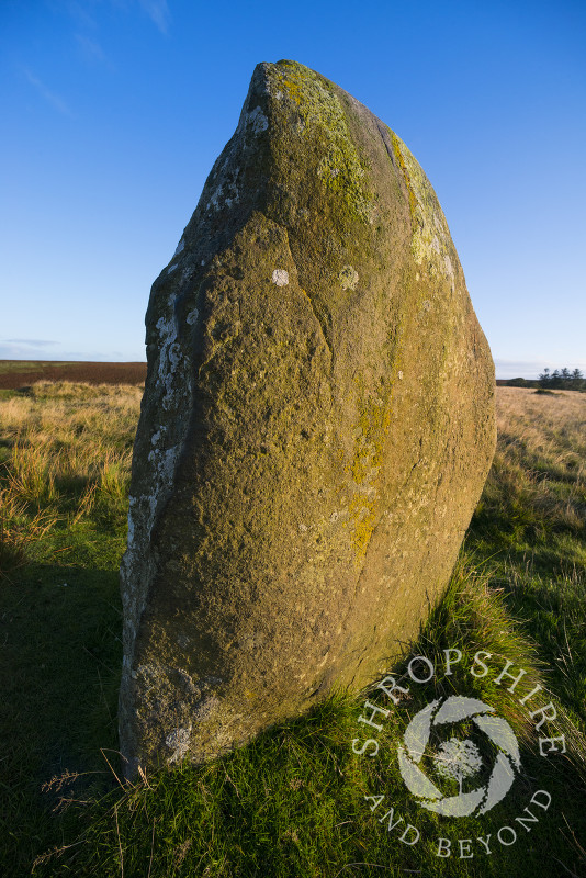 Early morning light on Mitchell's Fold stone circle, near Priest Weston, Shropshire.