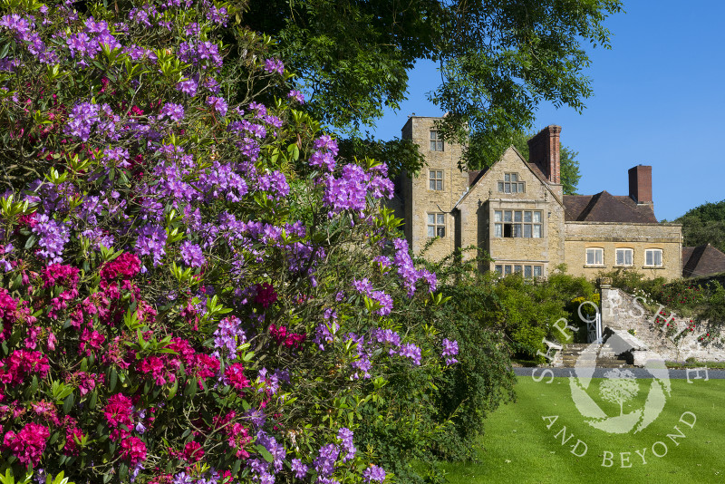 Rhododendrons outside Shipton Hall, near Much Wenlock. Shropshire.