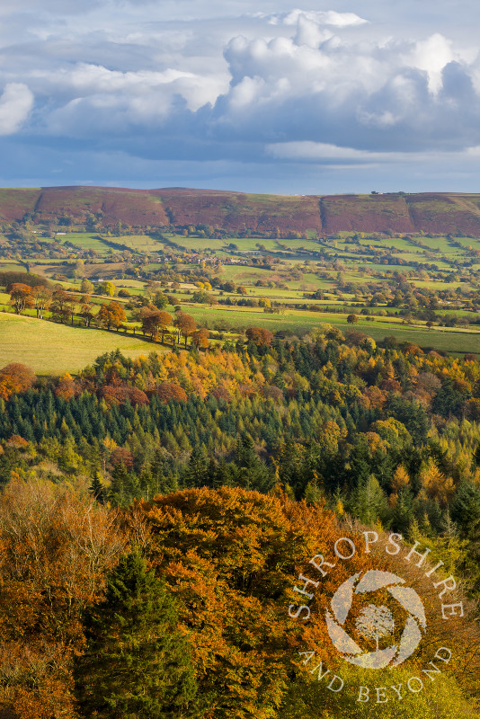 Autumn sunshine highlights the western slopes of the Long Mynd, seen from Heath Mynd, near Bishop's Castle, Shropshire.