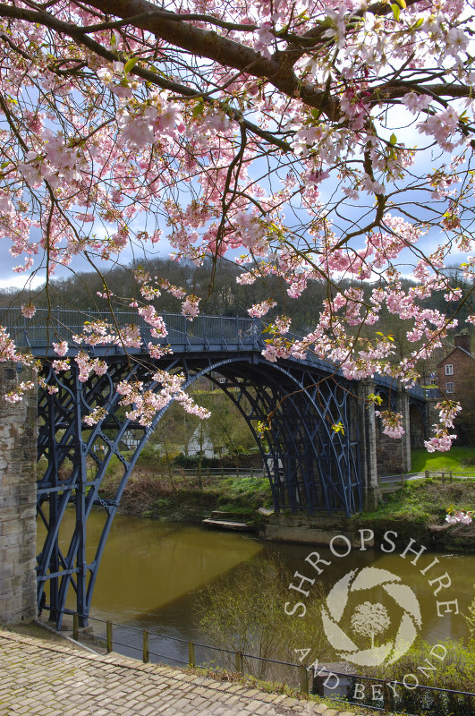 Spring blossom near the Iron Bridge at Ironbridge, Shropshire, England.