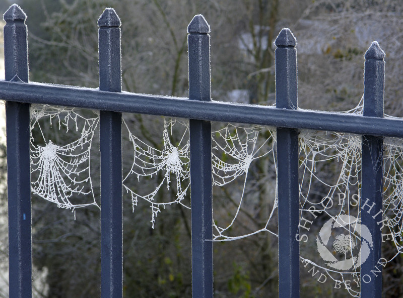 Frost-covered spider's web between the railings of the Iron Bridge at Ironbridge, Shropshire, England.