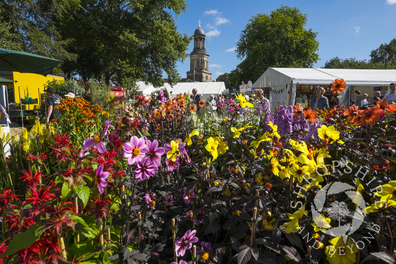 Flowers on display at Shrewsbury Flower Show with St Chad's Church, Shropshire.