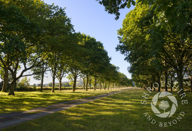 A mile long avenue of beech trees leading to Linley Hall, Shropshire, England.