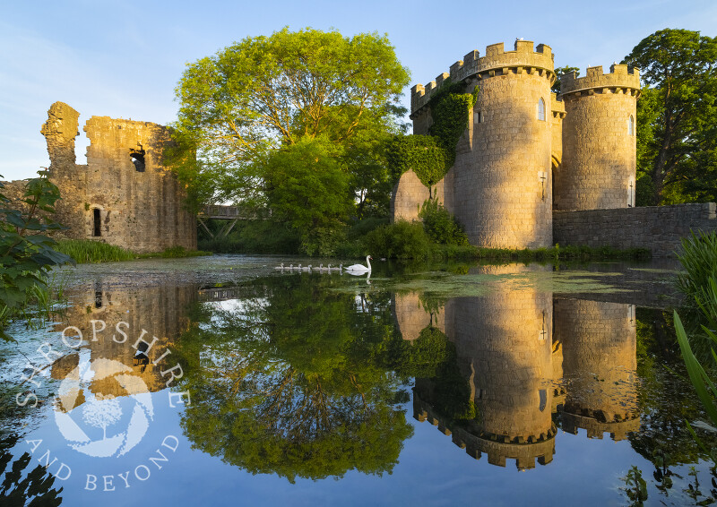 A swan and seven cygnets glide across the moat at Whittington Castle, near Oswestry, Shropshire.