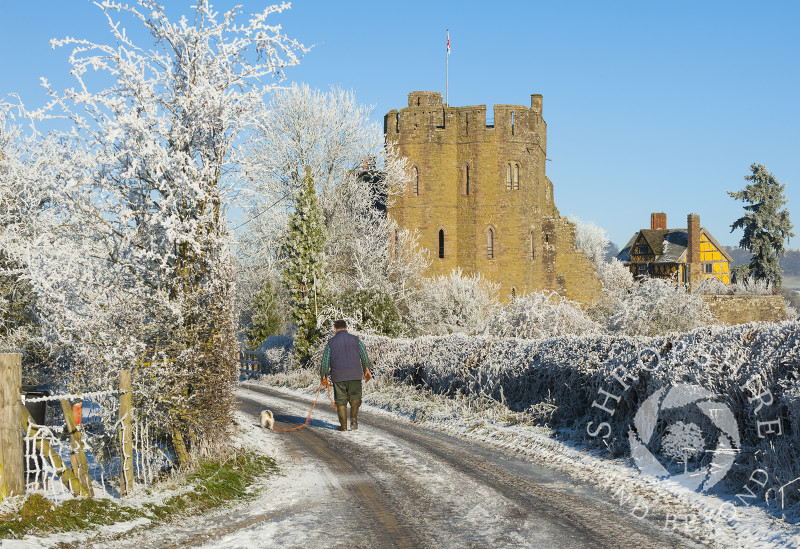 A man walks a dog along a frosty lane near the south tower of Stokesay Castle, Shropshire.
