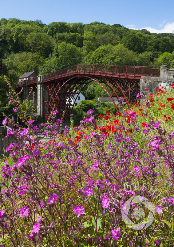 Wild flowers growing beside the Iron Bridge, Shropshire.