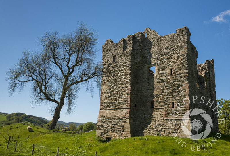 Springtime at Hopton Castle in the village of Hopton Castle, south Shropshire.