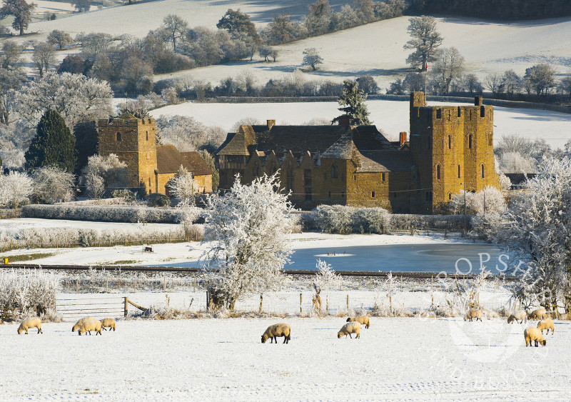 Sheep in a snow-covered field at Stokesay Castle, Shropshire.
