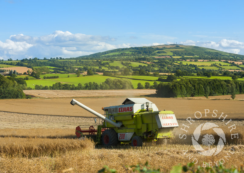 A combine harvester working beneath Brown Clee Hill, Shropshire, England.