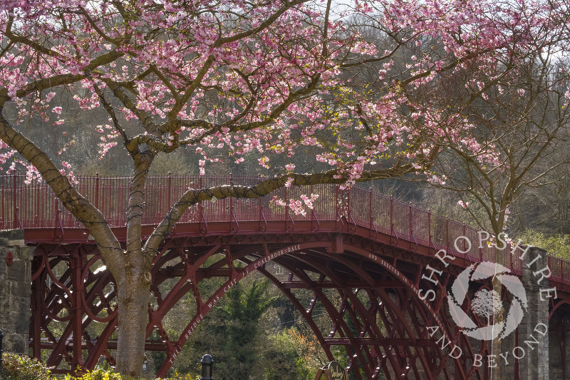 Spring blossom at Ironbridge, Shropshire.