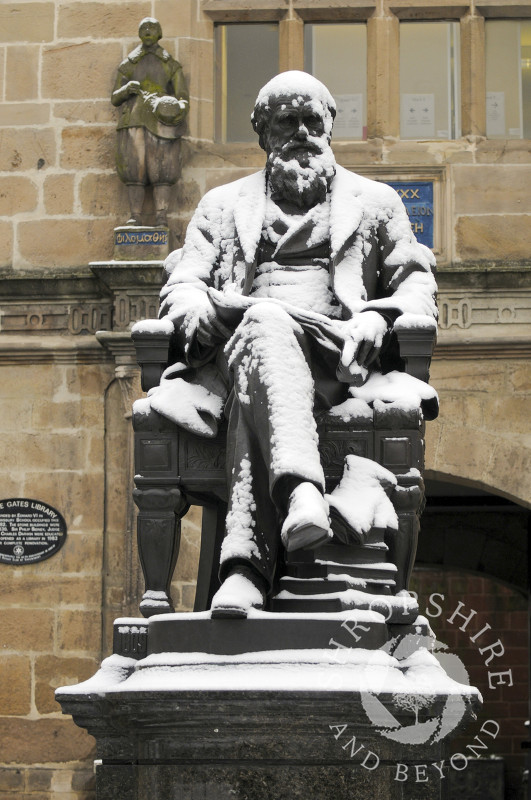 Snow covers the Charles Darwin statue outside Shrewsbury Library, Shropshire, England.