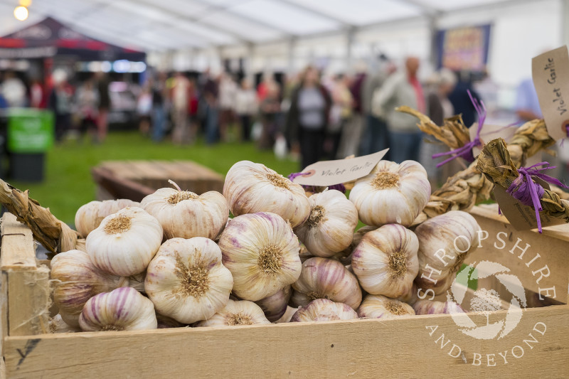 Garlic for sale on the French Flavour stall at Ludlow Food Festival, Shropshire.